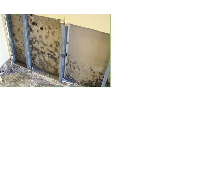 Mold Remediation Mold Remediation and Restoration in Saline, Cooper, and Lafayette Counties